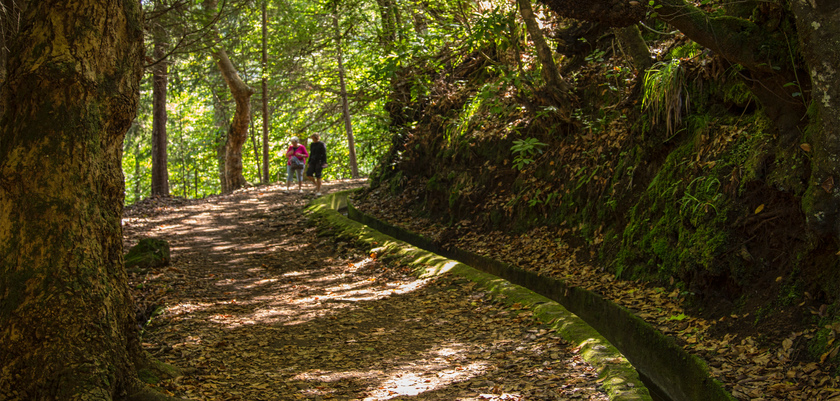 Funchal_levada-walking-trail.jpg
